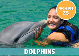 Punta Cana Daily - Excursions - Dolphins